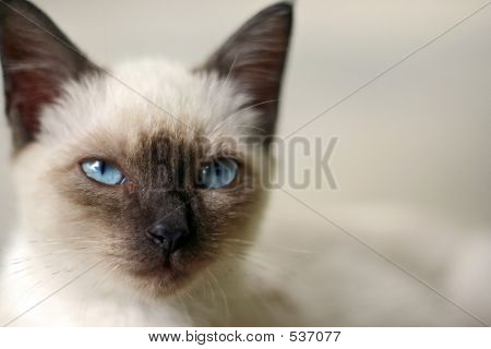 poster of a cat