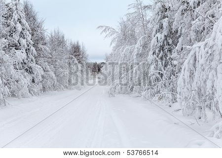 Wintry Road And Snow-covered Branches Of Trees In Winter
