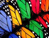 a group of colorful butterflies poster