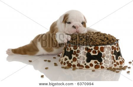 Bulldog Puppy With Dog Food