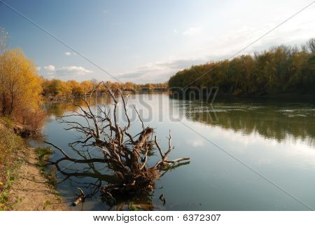 Autumn landscape with the dry tree which has fallen in the river poster
