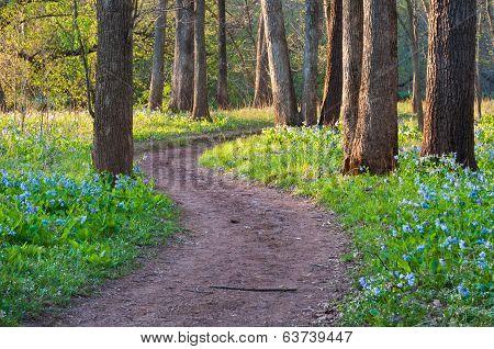 Bull Run Occoquan Spring Wildflower Trail