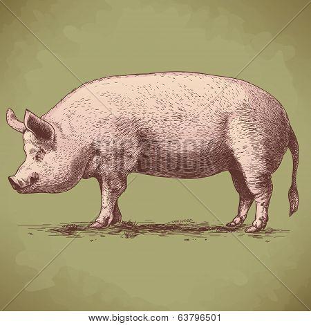 Vector Illustration Of Hand Drawn Big Hog
