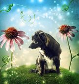 Black dog in a fantasy hilltop landscape with echinacea flowers poster