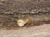 Snail creeps on tree poster