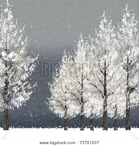 Winter Night Background With Snowy Trees