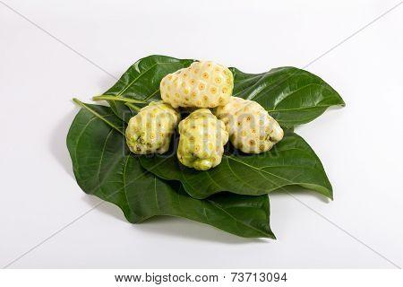 Morinda Citrifolia