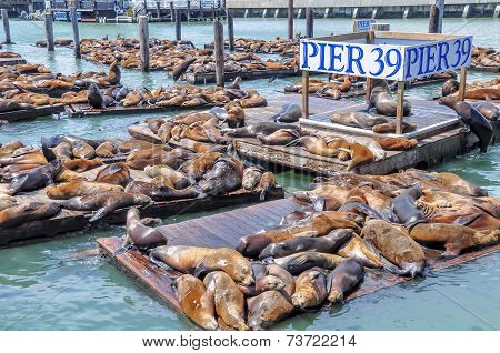 Sealions, Pier 39 and Fisherman's Wharf