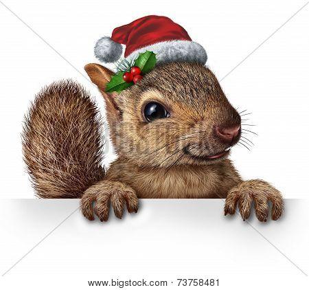 Holiday Squirrel