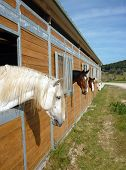 four horses in wooden stall. Countryside scenic poster