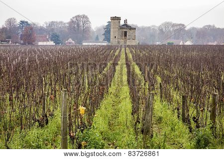 Vineyard In Burgundy