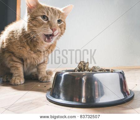 Cat Eating In The Floor