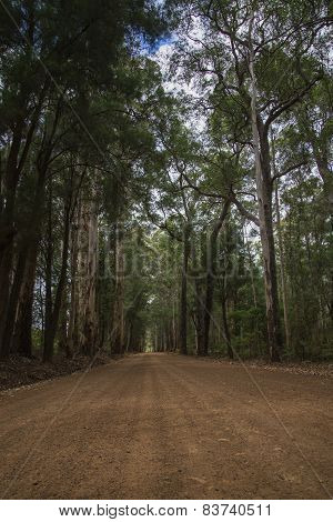Scenic entrance road to Warren National Park