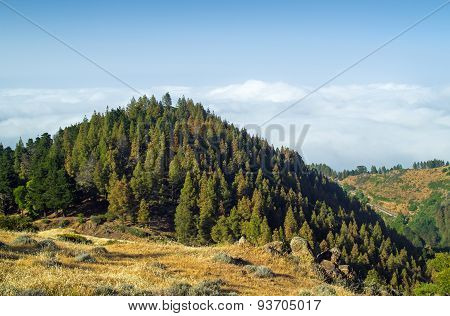 Inland Gran Canaria, View Over The Tree Tops Towards Cloud Cover On The North Of The Isalnd