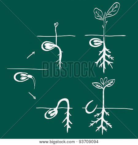Growing Seed Doodle
