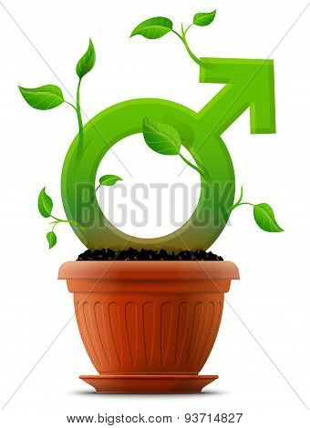 Growing Male Symbol Like Plant With Leaves In Flower Pot