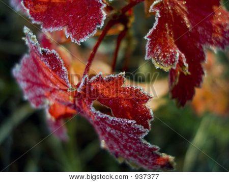 Redfrost_6