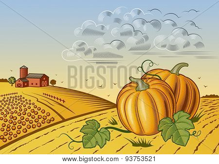 Pumpkin harvest landscape. Editable vector illustration with clipping mask.