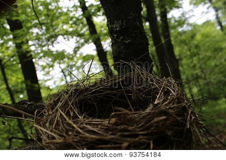 Unoccupied Bird's Nest