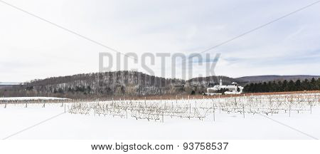 Wineyards During Winter In Oka, Quebec, Canada