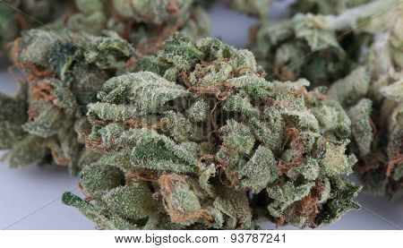 TUCSON, AZ-JUNE 15: Macro of Medicinal Marijuana Hybrid Snoop OG June 15, 2015 in Tucson, Arizona