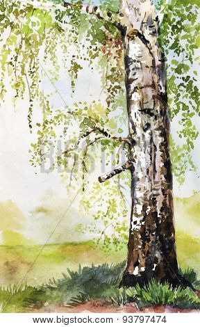 Hand-drawn watercolor illustration with birch