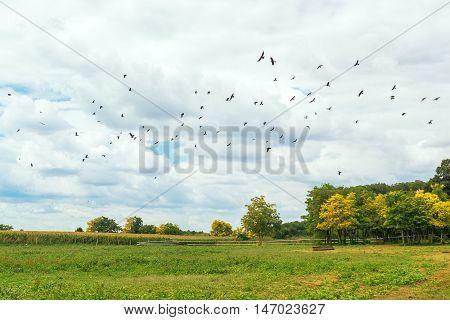 Flock of birds flying over empty field on bright sunny summer day