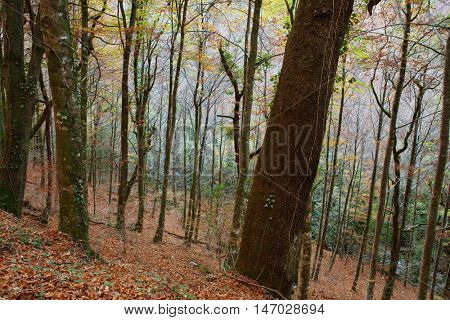 Autumn forest at Mata da Albergaria, Geres National Park, Portugal