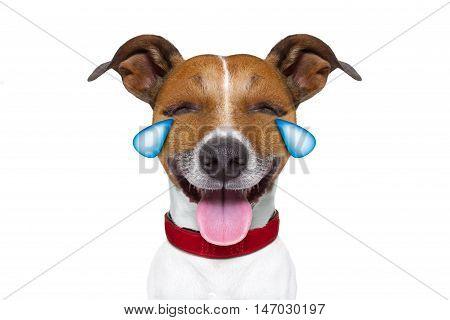 Emoticon Or  Emoji Dumb  Crying Laughing Dog