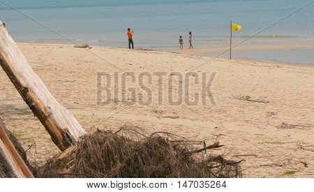uprooted pine trees in foreground, distant father and two children playing in the water at the beach