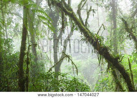 Misty rainforest in Monteverde cloud forest reserve Costa Rica poster