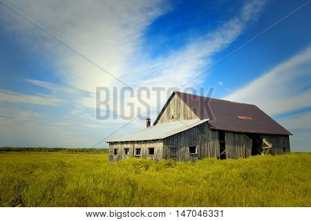 Little barn in a soybeans field during a nice summer day with a blue sky