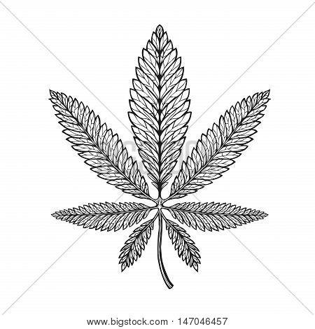 Marijuana ethnic graphic style. Cannabis, marihuana hemp symbol