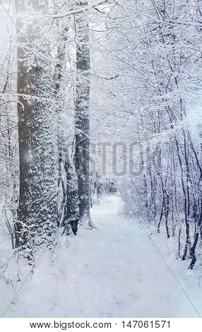 winter forest road among snow - xmas nature scene