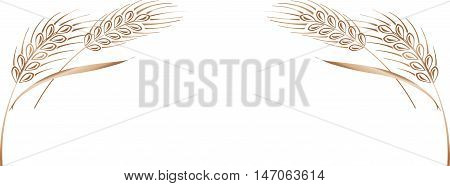 Vector illustration of four gold ripe wheat ears. Can be used as frame corner or border design element.