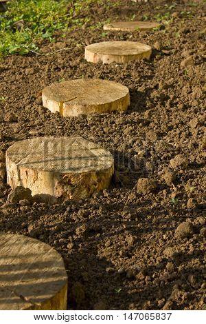 Round of birchen stump on damp soil