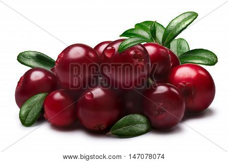 Lingonberries With Leaves, Paths