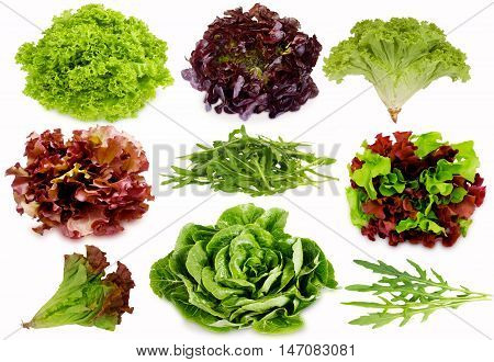 Fresh green and purple salad isolated on white background. Salad mix. Set of different foreshortening.