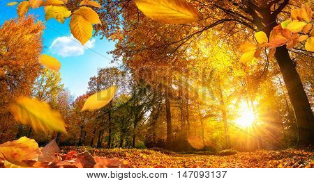 Golden autumn scene in a park with falling leaves the sun shining through the trees and blue sky