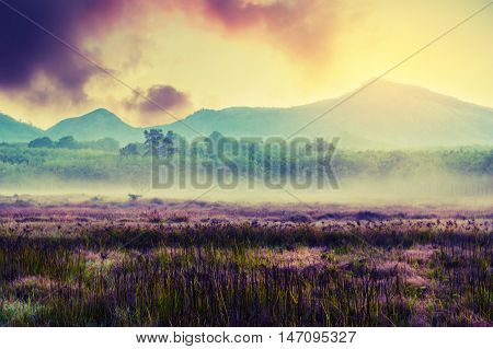 Vintage landscape nature background Purple meadow with green grass tree and mountain in wonderland