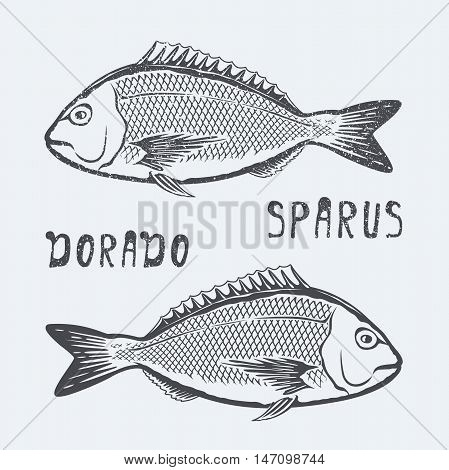 Dorado sparus fish vector illustration black and white