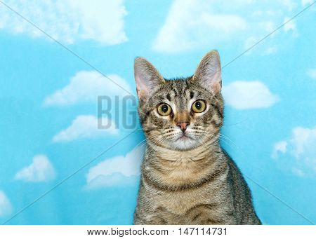 Portrait of a black and brown tabby cat looking quizzically at the viewer. Blue sky background with clouds.