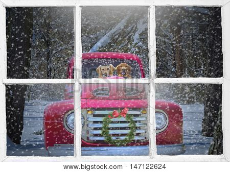 golden retriever in red vintage truck with Christmas wreath and windowpane frame