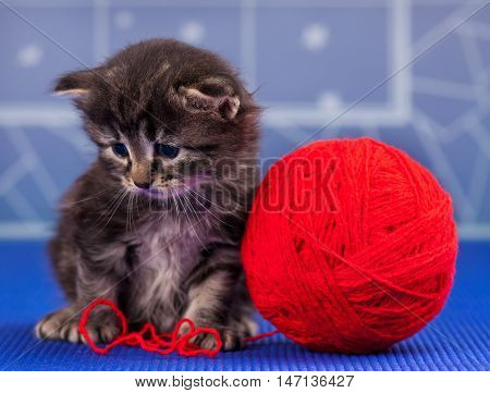 Cute little kitten with bright red yarn ball over light-blue background