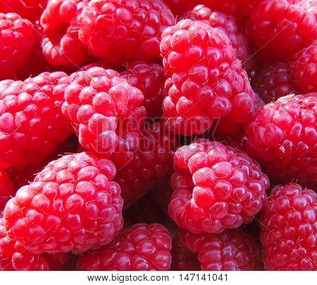 Pink raspberries, full frame shot of fresh juicy raspberry fruits.