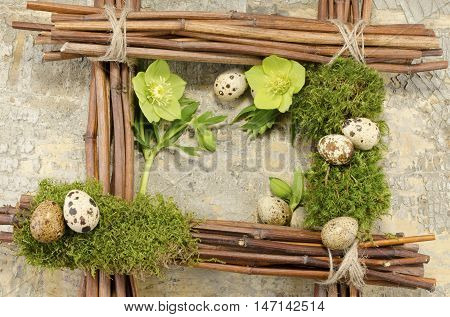 Easter frame with vintage background and seven boiled quail eggs plus two hellebore flowers