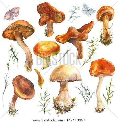 Set of watercolor vintage mushrooms isolated on white. Fall harvest forest mushrooms. Natural autumn botanical collection.