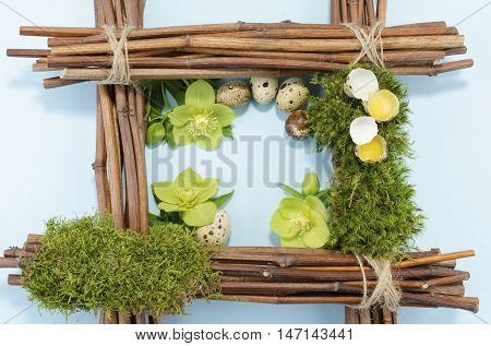 Easter frame with two raw and five boiled quail eggs and three hellebore flowers