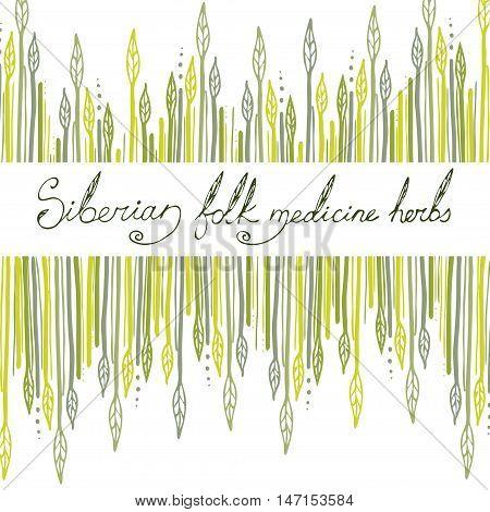 Siberian folk medecine herbs vector set. Botanical vector set.