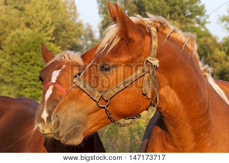 charming picture foal cradling the mare lit low setting sun